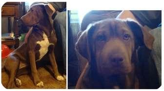 Labrador Retriever Mix Dog for adoption in Haughton, Louisiana - Dixie