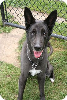Shepherd (Unknown Type) Mix Dog for adoption in Islip, New York - Mrs Clean