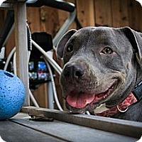 Adopt A Pet :: Zula - Santa Barbara, CA