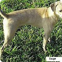 Adopt A Pet :: Sarge - Moulton, AL