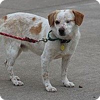 Adopt A Pet :: Boone McCoy - Hastings, NY