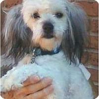 Adopt A Pet :: SUSIE Q - Brooksville, FL