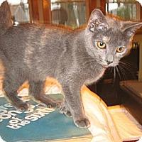 Adopt A Pet :: Lucille - Portland, ME