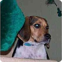 Adopt A Pet :: Winchester - Phoenix, AZ