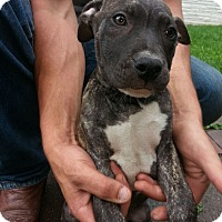 Adopt A Pet :: Cash - Elderton, PA