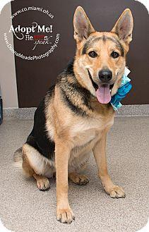 German Shepherd Dog Dog for adoption in Troy, Ohio - Lucy
