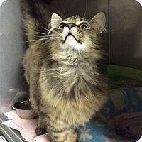 Adopt A Pet :: Chewie - Byron Center, MI