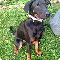 Adopt A Pet :: Addie - Morgantown, WV