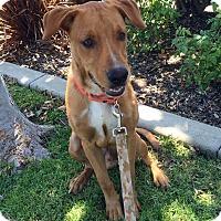 Adopt A Pet :: Beauregard - Mission Viejo, CA