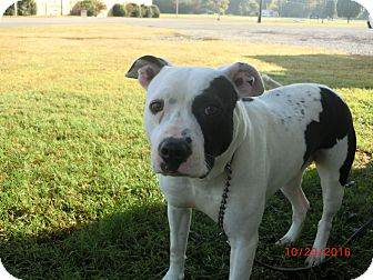 Pit Bull Terrier Mix Dog for adoption in MC KENZIE, Tennessee - Elsa