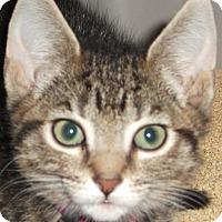 Adopt A Pet :: Pandora - Colmar, PA