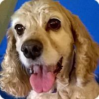 Adopt A Pet :: Kona - Campbell, CA