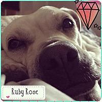 Adopt A Pet :: Ruby - Pottstown, PA