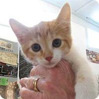 Adopt A Pet :: Tequila - Belleville, MI
