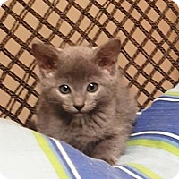 Adopt A Pet :: Vinn - Americus, GA