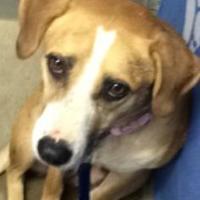 Adopt A Pet :: Sunny - Greenville, KY