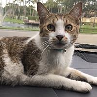 Adopt A Pet :: Ben - oakland park, FL