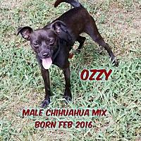 Adopt A Pet :: Ozzy - Huddleston, VA