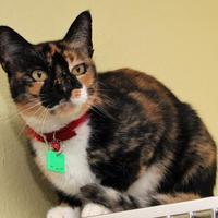 Adopt A Pet :: Celine - Venice, FL
