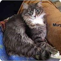 Adopt A Pet :: Murphy - Portland, OR