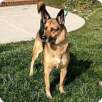 Adopt A Pet :: Koda - Knoxville, TN