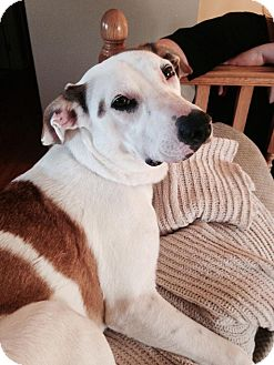 Hound (Unknown Type)/Terrier (Unknown Type, Medium) Mix Dog for adoption in Douglas, Ontario - Sadie