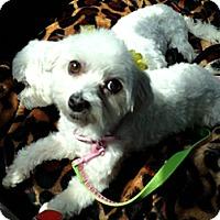 Adopt A Pet :: Mimi - Rancho Mirage, CA