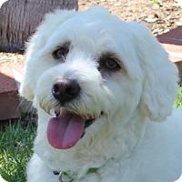 Adopt A Pet :: Scooter - La Costa, CA