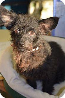 Terrier (Unknown Type, Small) Mix Dog for adoption in Bradenton, Florida - Elsie