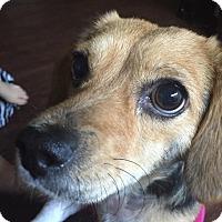 Adopt A Pet :: Mimosa - Los Angeles, CA