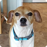Adopt A Pet :: Stewart - Lady's Man! - Bend, OR