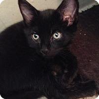 Adopt A Pet :: Prince - North Highlands, CA