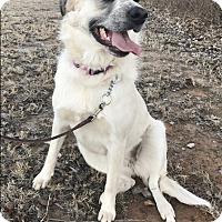 Adopt A Pet :: Josie  *Adopted - Tulsa, OK