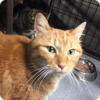 Adopt A Pet :: Pumpkin -$10 adoption fee - Jamestown, MI