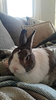 Dutch for adoption in Erie, Pennsylvania - Mickey