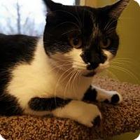 Adopt A Pet :: Lara - Verona, WI