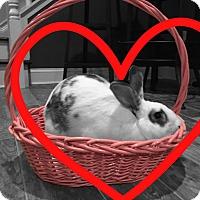Adopt A Pet :: Buck - Conshohocken, PA