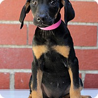 Adopt A Pet :: Marcy - Waldorf, MD