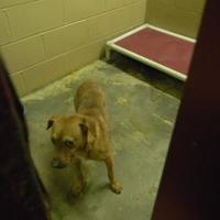 Adopt A Pet :: freeway - Monticello, GA
