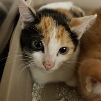 Adopt A Pet :: BeBe - Bishop, GA