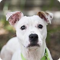 Adopt A Pet :: Dani - Houston, TX