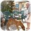 Photo 1 - Coonhound (Unknown Type) Mix Dog for adoption in Miami Beach, Florida - Gomer, FL
