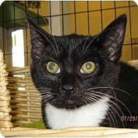 Adopt A Pet :: Baby - Catasauqua, PA
