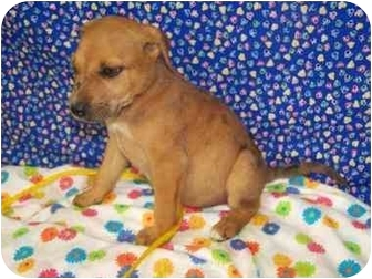 Beagle Mix Puppy for adoption in New Carlisle, Indiana - Beth