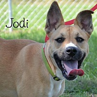 Mountain Cur Mix Dog for adoption in DuQuoin, Illinois - Jodi