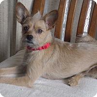 Adopt A Pet :: Moose aka Mohawk - Quail Valley, CA