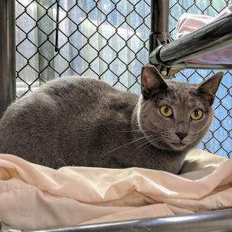 Domestic Shorthair/Domestic Shorthair Mix Cat for adoption in New Freedom, Pennsylvania - Martha