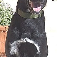 Adopt A Pet :: Mosey - Los Angeles, CA