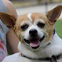 Adopt A Pet :: Bybee - New York, NY