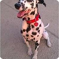 Adopt A Pet :: Spencer - League City, TX